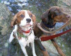 Doggie Adventures from Wigglewag