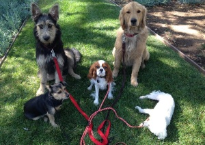 Doggie Daycare Services in Pasadena