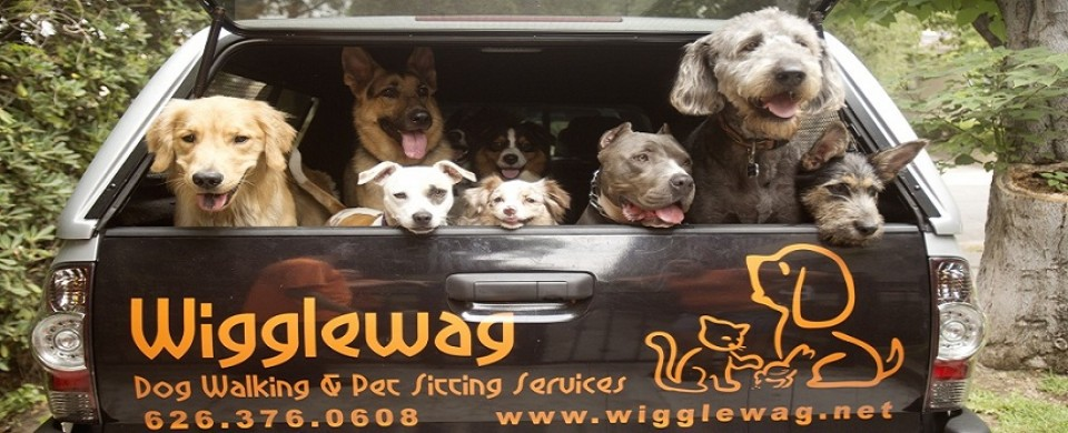 Wigglewag Training Dog Services Pasadena Ca