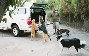 Altadena Dog Boarding