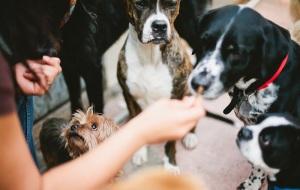Altadena Dog Walkers