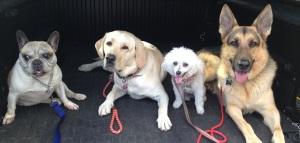 Doggie Daycare Sierra Madre