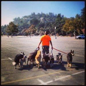 Dog Walking Sierra Madre