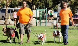 La Canada Dog Walking