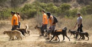 Monrovia Dog Daycare