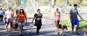 Monrovia Dog Walking