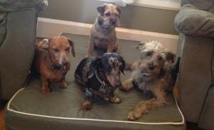 South Pasadena Dog Daycare